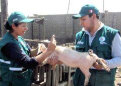 Impulsan mayores controles en el sector porcino de todo el país