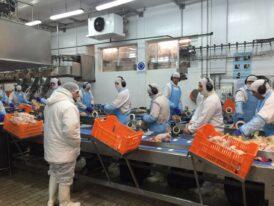 Trabajadores avícolas lograron un aumento salarial del 36%