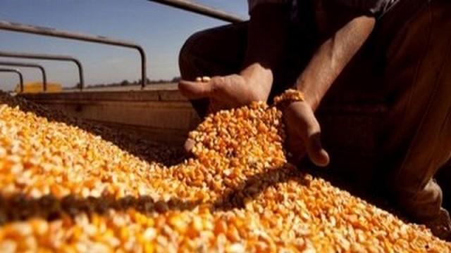 Foto: agrositio.com.ar